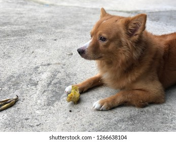 Banana Dog Images Stock Photos Vectors Shutterstock