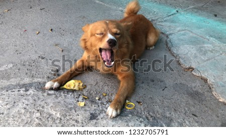 Brown Dog Puppy Eating Banana On Stock Photo Edit Now 1232705791
