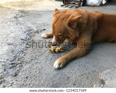 Brown Dog Puppy Eating Banana On Stock Photo Edit Now 1234017589