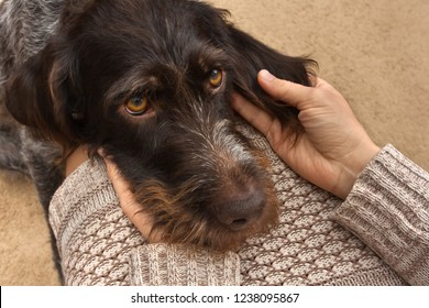brown dog put his head woman on her knees
