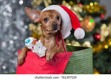 a brown dog in a Santa Claus hat sits in a gift box on a background of a blurry bokeh, presents for Christmas