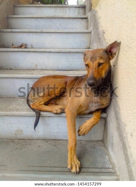 a brown dog  sitting in stairs