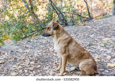 A brown dog sitting in the yard of a restaurant in the Darband Valley in the mountain Tochal , Tehran, Iran
