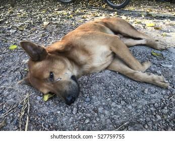 brown dog sleep on floor