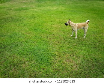 Brown Dog Standing in the Green Grass Field