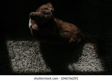 Brown Dog in Sunlight