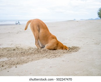 brown domestic dog hides its head in the sand hole, escape from failure concept
