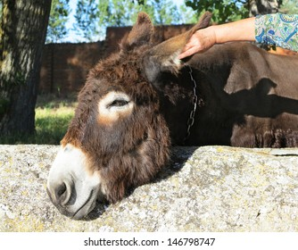 Brown donkey head in the meadow.