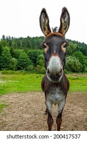 a brown donkey looking straight