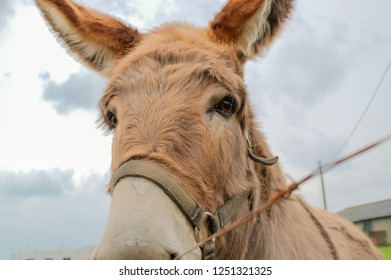 white and brown donkey images stock photos vectors shutterstock