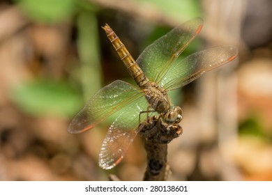 brown dragonfly on the wood