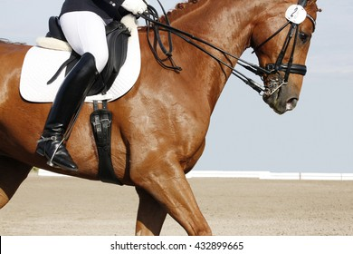 a brown dressage horse with rider on a tournament