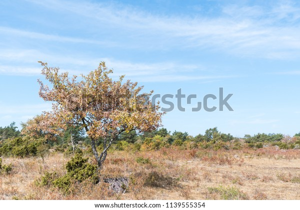 Brown dried landscape because lack of rain at the swedish island Oland