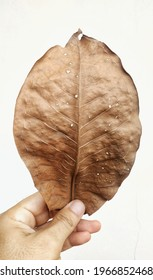 Brown dried leaf with white background  - Shutterstock ID 1966852468