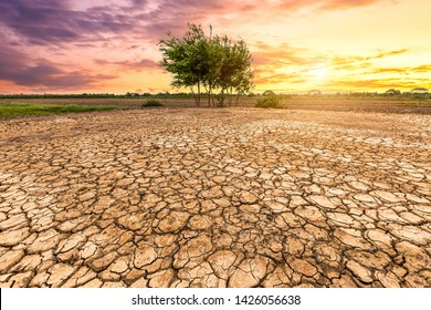 Brown drought dry land soil or cracked ground texture and green tree with from agriculture barren on orange sunset sky background,Global warming.