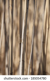 brown dry cane background