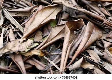 Brown Dry Leaf. Dry Leaves on Brown Soil in Autumn Forest Background Great for Any Use.