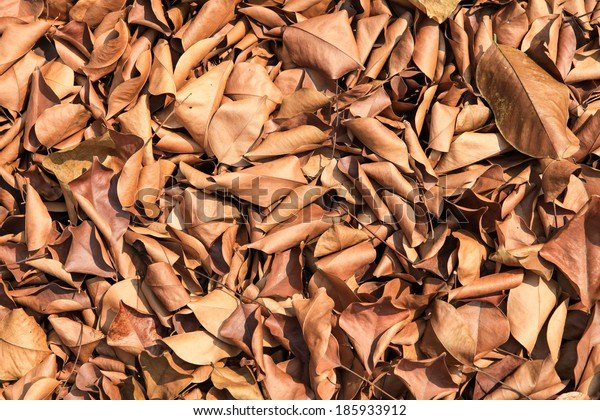 Brown dry leaves on the ground.