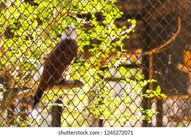 Brown eagle behide the cage, Feels like a loss of independence.