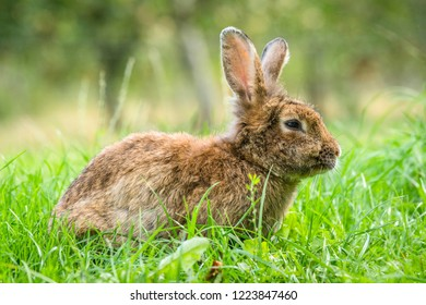 Brown easter bunny in fresh green grass in the spring with bokeh lights in the background