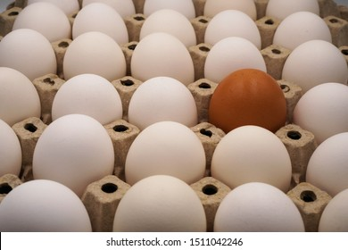 a brown egg among white eggs in the egg carton ,differentiation and outstanding concept