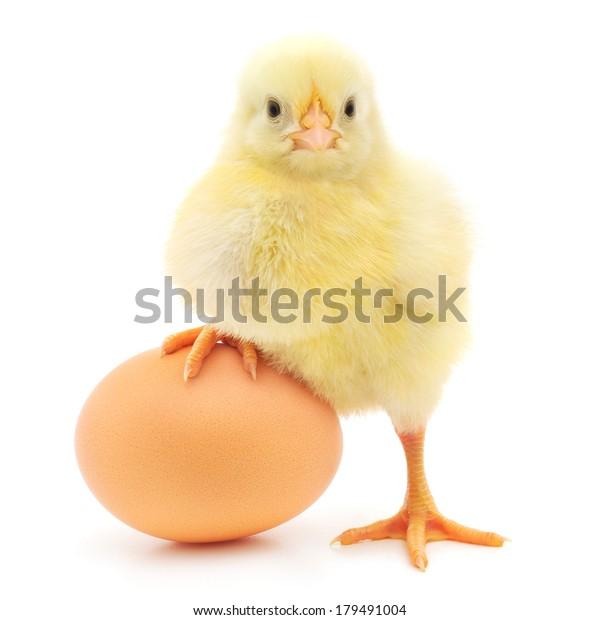 braunes Ei und Huhn einzeln auf weißem Hintergrund