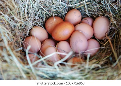brown eggs in a basket with hay