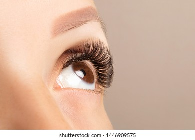 Brown eye with beautiful long lashes closeup. Brown color eye lash extension, 3D or 4D volume. Eyelash care, lamination, extensions, coloring, curling.