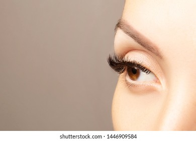 Brown eye with beautiful long lashes closeup with copy space. Brown color eye lash extension, 3D or 4D volume. Eyelash care, lamination, extensions, coloring, curling.