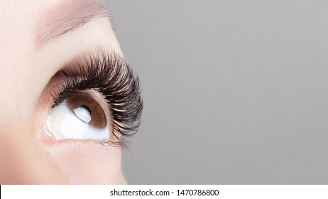 Brown eye with beautiful long lashes close-up, wide format. Brown color eye lash extension, 3D or 4D volume. Eyelash care, lamination, extensions, coloring, curling.