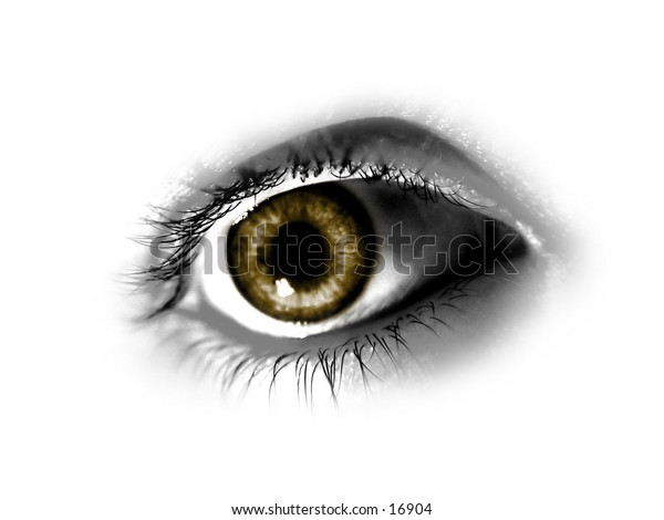 Brown Eye isolated on white background
