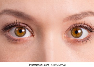 Brown eyes close-up on white face with clean skin with natural make-up