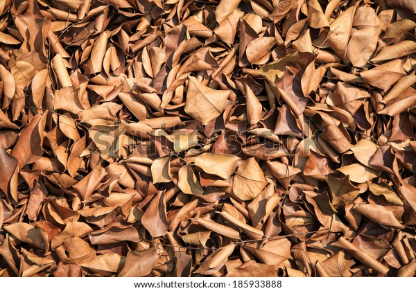 Brown fallen leaves laying on the ground.
