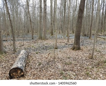 brown fallen leaves and tree trunks in forest or woods