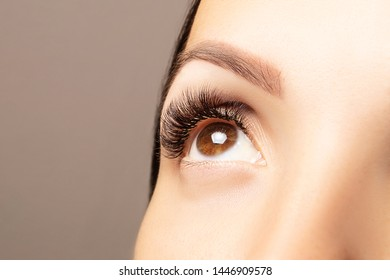 Brown female eye with beautiful long lashes closeup. Brown color eye lash extension, 3D or 4D volume. Eyelash care, lamination, extensions, coloring, curling.