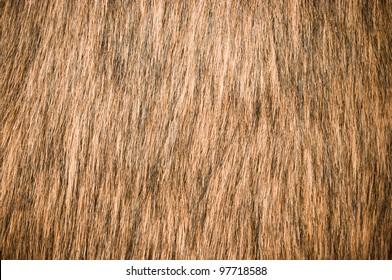 Brown fur for background usage