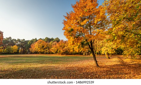 Brown and gold forest in the autumn in Poland