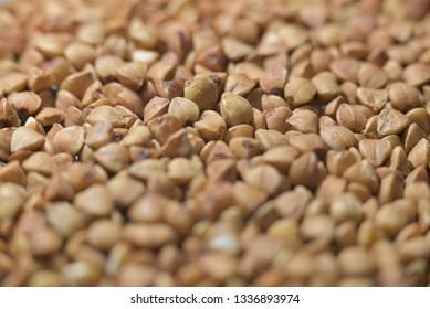 Brown grain buckwheat common, Macro photo, above. Gluten-free pseudocereal. Natural photo.