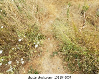 brown grass or lawn with white flowers or weeds and trail or path