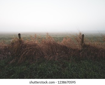 Brown grass leaning on a fence with a foggy field in the background
