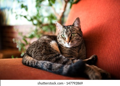 Brown Gray Cat Lounging on Red Arm Chair Near Green Plant