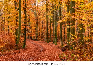 Brown and green forest in the autumn, Europe