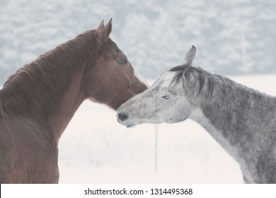 Brown and grey horses