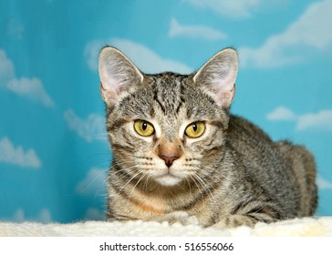 Brown and grey striped tabby kitten laying on fluffy sheepskin looking directly at viewer, blue background sky with clouds. Copy Space