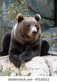 brown grizzly bear seated on a rock