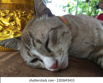 The brown hair cat sleeping on the table