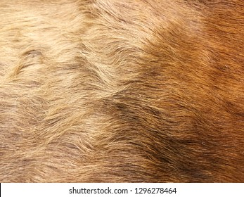 Brown hair fur for background or texture