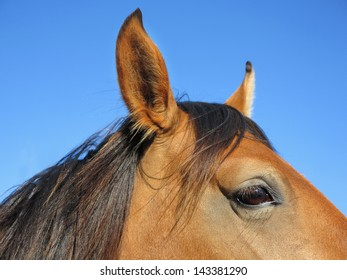 Brown head of horse closely in the meadow.