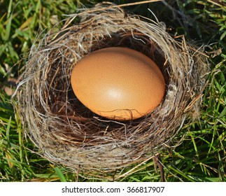 Brown hen egg in a nest