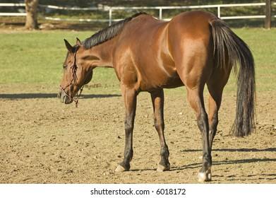 big stallion cock denise milani sex video